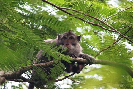 Monkey forest - Ubud