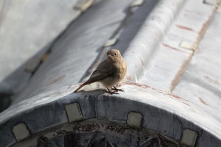 A very cute visitor