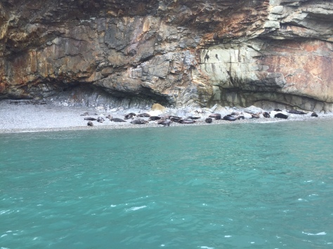 Observing seals at Ramsey Island