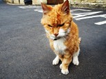 A grumpy old cat