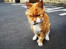 A grumpy old cat