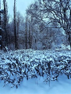 Lots of snow...we have had a very beautiful Christmas